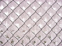 Covered with frost Stock Images