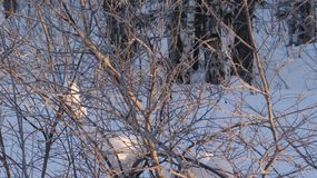 Branches of trees and bushes covered with frost. stock image