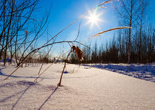 Covered with frost grass on background of the sun winter day Stock Photography