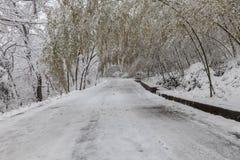 covered frozen lamp nigth road snow street trees winter Στοκ Εικόνες