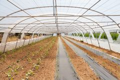 Covered greenhouse Royalty Free Stock Images