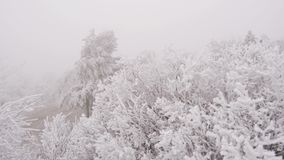 Covered with a hoarfrost mountain glade. Windy and foggy weather. A strong wind blows, which swings the branches of trees stock video footage