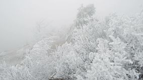 Covered with a hoarfrost mountain glade. Windy and foggy weather. A strong wind blows, which swings the branches of trees stock video