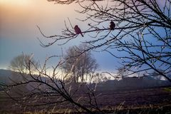 Covered with ice a tree branch on which two birds sit, against t. He background of the blurred evening sky Royalty Free Stock Photo