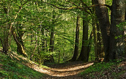 Covered with leaves path into the forest. Stock Photo