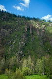 Covered with mixed forests of the Altai mountains. Stock Photo