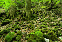 Covered with moss ground Royalty Free Stock Photo