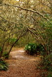 Covered Path. A well worn path through the woods with small trees arching over Royalty Free Stock Photos