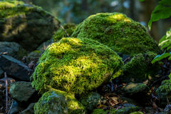 Covered rocks with moss Royalty Free Stock Photography