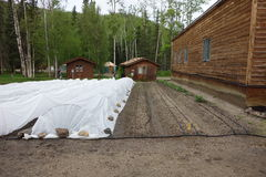 Covered seedlings in alaska. Royalty Free Stock Photography