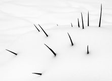 Covered in snow. A plant covered in snow Royalty Free Stock Photo
