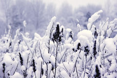 Covered with Snow. A close-up of snow covered flora stock photos