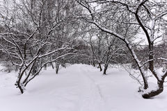 Covered with snow apple on a park alley Stock Photography