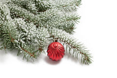 Covered with snow branch of a Christmas tree and brilliant red b Stock Photo