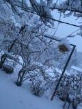snowy backyard stock photos