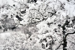 Covered in snow | 3 Stock Image
