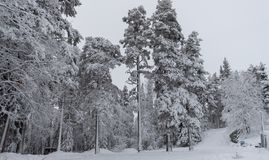 Covered trees with snow stock photos