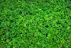 Covered with vegetation. Green vegetation covering all the picture Stock Photography