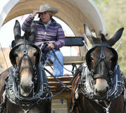 A Covered Wagon, Mule Team and Driver Royalty Free Stock Photos