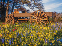 Covered wagon in Texas Hill country royalty free stock image