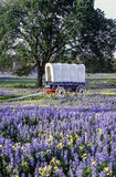 Covered wagon in texas Stock Photo