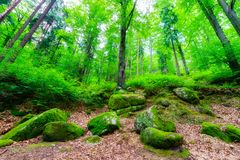 Free Covered With Moss Rocks And Trees In A Magical Forest In The Pol Royalty Free Stock Photos - 103089388