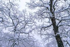 Coveredby Schnee des Baums im Winter Stockfotos