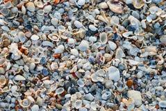 Coverhead sikt av snäckskal på stranden royaltyfri fotografi