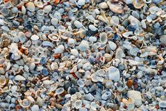 Coverhead view of seashells at beach royalty free stock photography