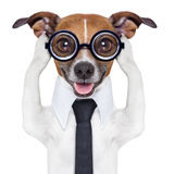 Covering ears dog. Covering both ears dog with paws and a blue tie stock images