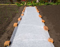 Covering material spread on the ground protects the shoots from frosts Stock Photo