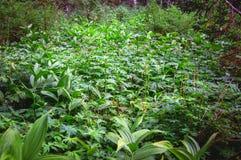 Covert overgrown green grass. Covert overgrown with green grass. Siberian taiga Stock Photography