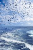 Covey of birds. On a background sky and sea royalty free stock photography