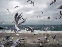 Covey des mouettes sur une plage marine en hiver images stock
