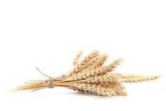 Covone delle orecchie del grano su fondo bianco Fotografie Stock Libere da Diritti