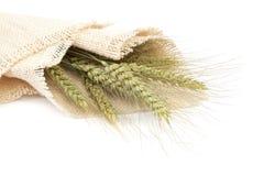 Covone delle orecchie del grano su fondo bianco Immagini Stock Libere da Diritti