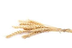 Covone delle orecchie del grano su fondo bianco Fotografia Stock