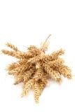 Covone delle orecchie del grano su fondo bianco Immagine Stock
