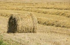 Covone di grano dorato sul campo Immagini Stock Libere da Diritti