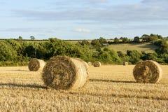 Covoni del cereale e campagna collinosa, Cornovaglia Fotografia Stock Libera da Diritti