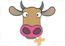 Cow. A cow head with flower in mouth Stock Photo