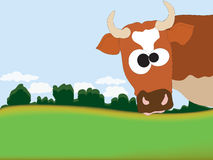 Cow. The surprised cow on a meadow Stock Image