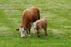 Free Cow - 2 Stock Image - 5491761