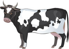 Cow. Vector black and white cow Stock Photo