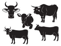 Cow. The figure shows a cow, bull and calf Stock Photography