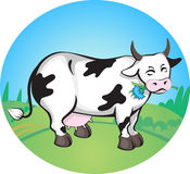 Cow. Spotted cow grazing in the field Stock Image