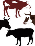 Cow. A calf animals it is isolated Stock Photos