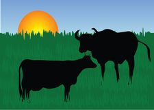 Cow. Silhouette of cows front of sky Stock Image