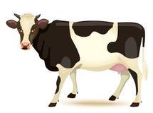 Free Cow Royalty Free Stock Photos - 43743378