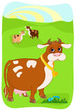 Cow. The cow is grazed on a pasture Royalty Free Stock Images